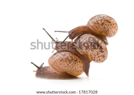 Small garden snail on a white background. Concept for competition.