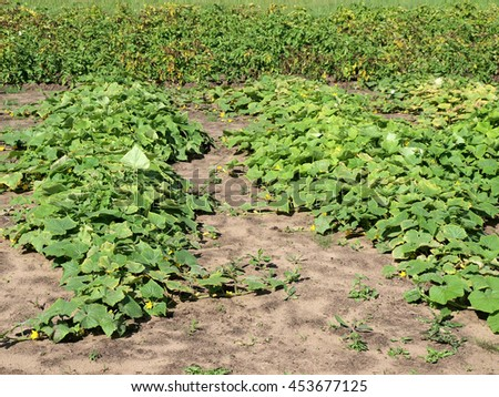Small garden with different vegetables on summer in sunny day. - stock photo