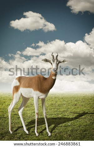Small gazelle profile taken, in their natural habitat. Photomanipulation - stock photo