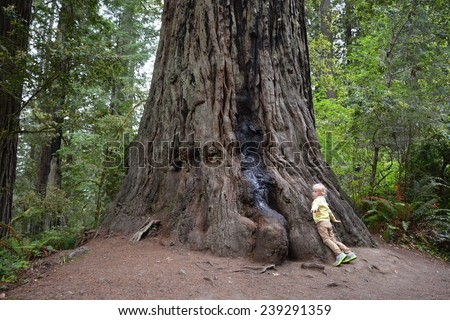 Small girl and giant tree - stock photo