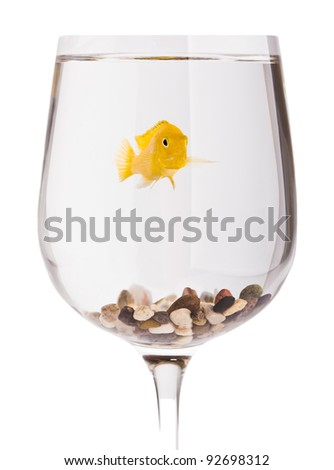 small goldfish in glass isolated on white - stock photo