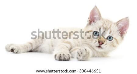 Small gray kitten on a white background - stock photo