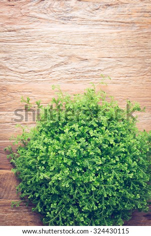 small green bush decorated interior on brown wooden table furniture
