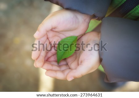 Small green leaf in child hand on palm. Conceptual design nature. - stock photo