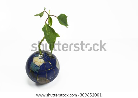 Small green plant apparently growing from Earth like globe , conceptual image about environmental issues and sustainable growth in the future - stock photo