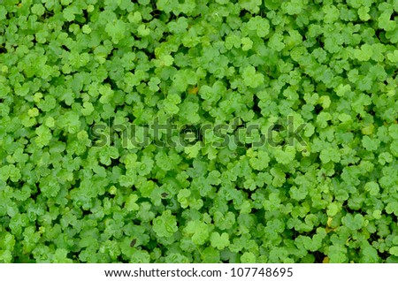 Small green plant background - stock photo