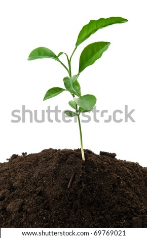 small green plant growing from soil