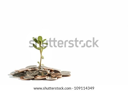 Small green plant growing out of coins on white background