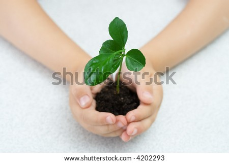 Small green plant in children's palms - stock photo