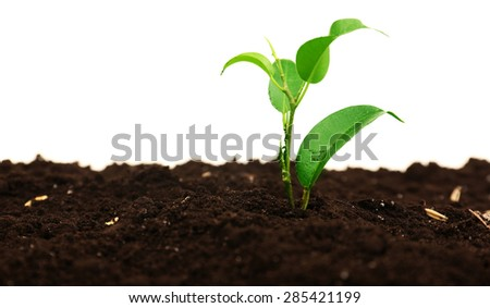 Small green plant in soil isolated on white