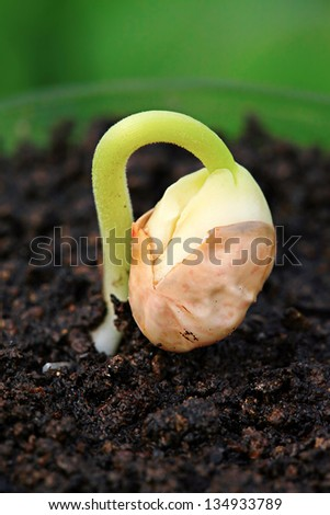 Small green plant in soil. Very small depth of field. - stock photo
