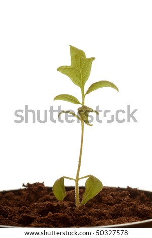 Small green plant on isolated white background