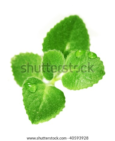 Small green plant with water drops  isolated on the white