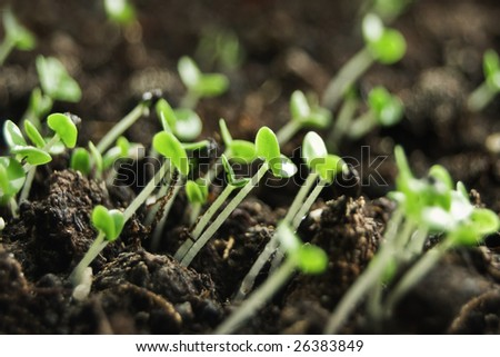 small green plants close up - stock photo