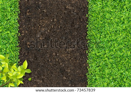 Small green plants depend on soil manure. - stock photo