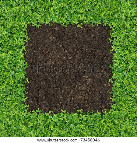 Small green plants depend soil manure a square frame.