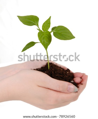 small green seedling with soil resting in woman's hands. isolated on white - stock photo