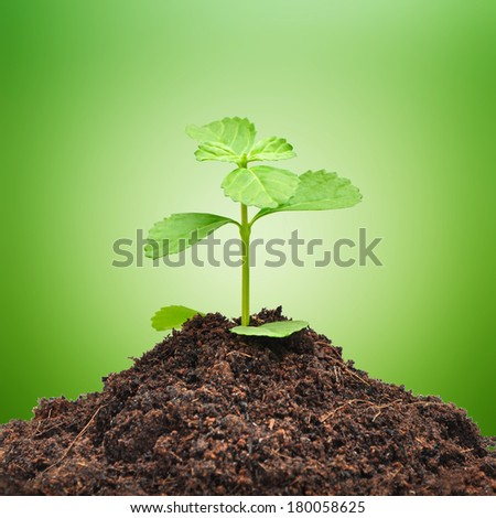 Small green sprout growing out from heap of soil - stock photo