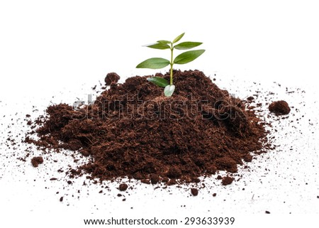 Small green sprout in soil over white background - stock photo