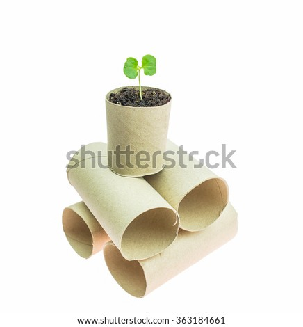small Green sprouts growing in tissue core on white Background