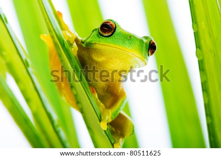 Small green tree frog holding on to palm tree
