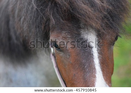 Small grey pony baby with brown head in close view in the green farm field