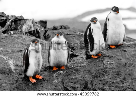 Small group of penguin chicks - stock photo