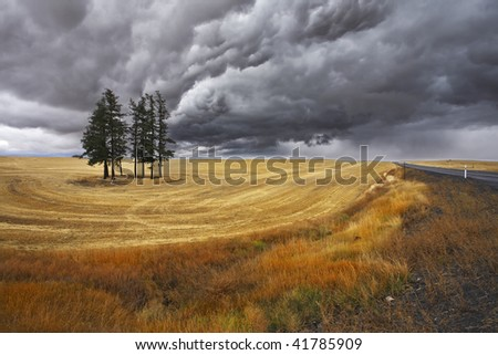 Small grove in fields after a harvest. Soon there will be a thunder-storm - stock photo