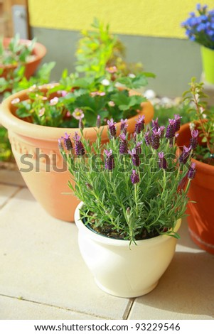 Small herb and flower garden built on small roof garden - stock photo