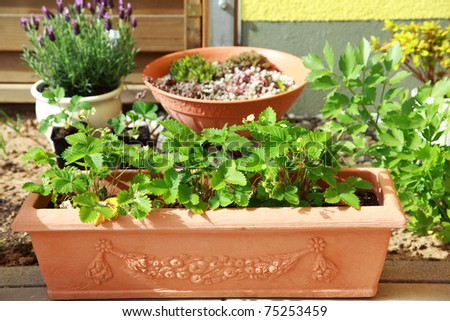 Pleasing Balcony Garden Stock Images Royaltyfree Images  Vectors  With Gorgeous Small Herb And Flower Garden Built On Terrace Or Roof With Charming Jamie Oliver Restaurant London Covent Garden Also Garden Tiller Hire In Addition North London Garden Centre And Weather Welwyn Garden As Well As Promise Me A Rose Garden Additionally Hozelock Garden Kneeler From Shutterstockcom With   Gorgeous Balcony Garden Stock Images Royaltyfree Images  Vectors  With Charming Small Herb And Flower Garden Built On Terrace Or Roof And Pleasing Jamie Oliver Restaurant London Covent Garden Also Garden Tiller Hire In Addition North London Garden Centre From Shutterstockcom