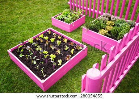 Small herb garden. Pink raised beds with herbs and vegetables. Trendy garden design - stock photo