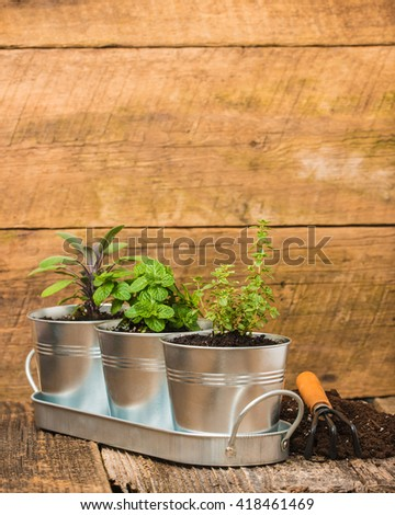 Small herbs in metal containers to create an indoor herb garden. - stock photo