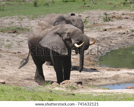 small herd of elephants at the water hole
