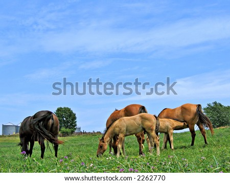 Small herd of mares and foals grazing in a pasture on a summer day - stock photo