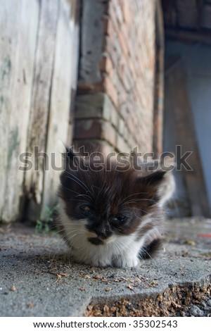 small homeless kitten - stock photo
