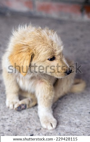 Small homeless puppy outdoors - stock photo