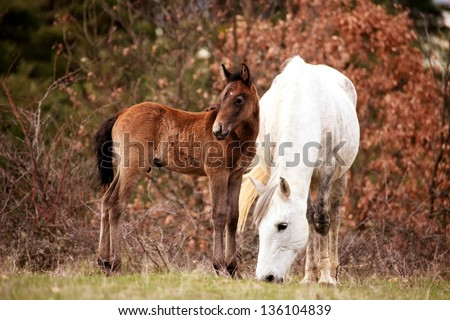 small horse and his mommy - stock photo