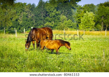Small Horse on american farm
