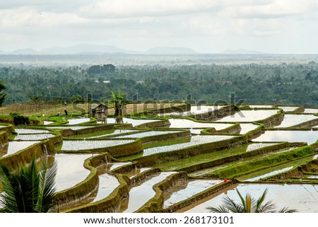 Small house and rice fields on Bali Indonesia - stock photo