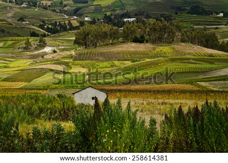Small house in between quinoa crops plantations in Colta, Chimborazo province, Ecuador - stock photo