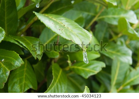 Small icicle on the green leaf - stock photo