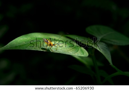 small insects perch on a leaf - stock photo
