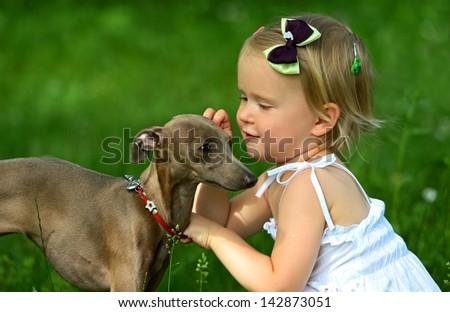 Small Italian greyhound in a city park - stock photo