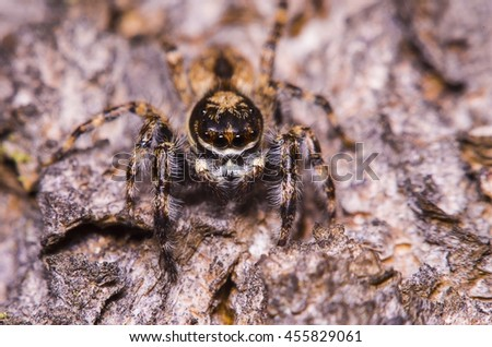 Small jump spider in the forest Thailand