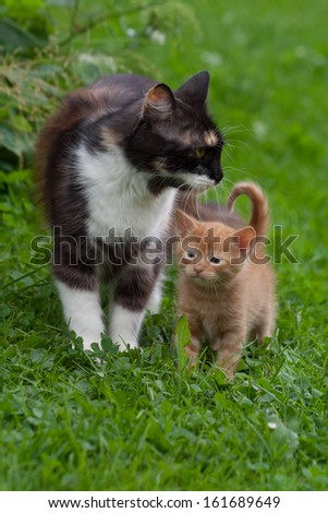 Small kiten with its mother