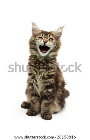 small kitten against white background - stock photo
