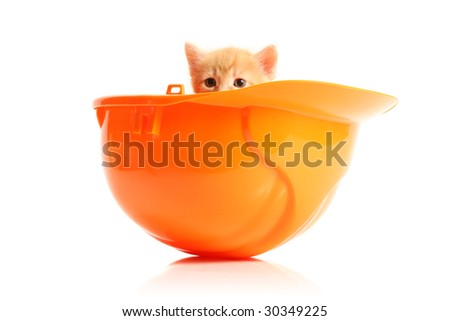 Small kitten and orange hardhat, isolated on white - stock photo