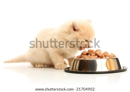 Small kitten eats from a steel bowl, isolated on white - stock photo