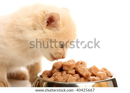Small kitten eats from a steel bowl, isolated on white