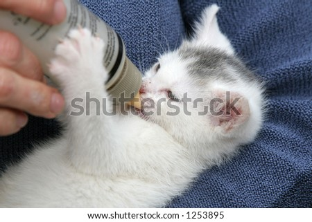 Small kitten enjoying her drink - stock photo